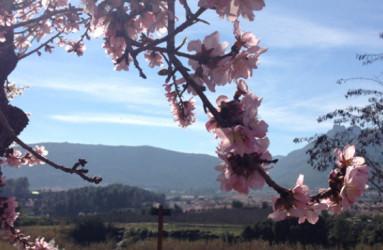 Rutas de los almendros en flor - Alcalalí turismo