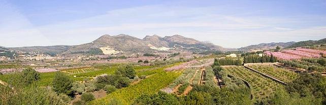 Almendros Alcalalí en flor Costablanca ComunidadValenciana