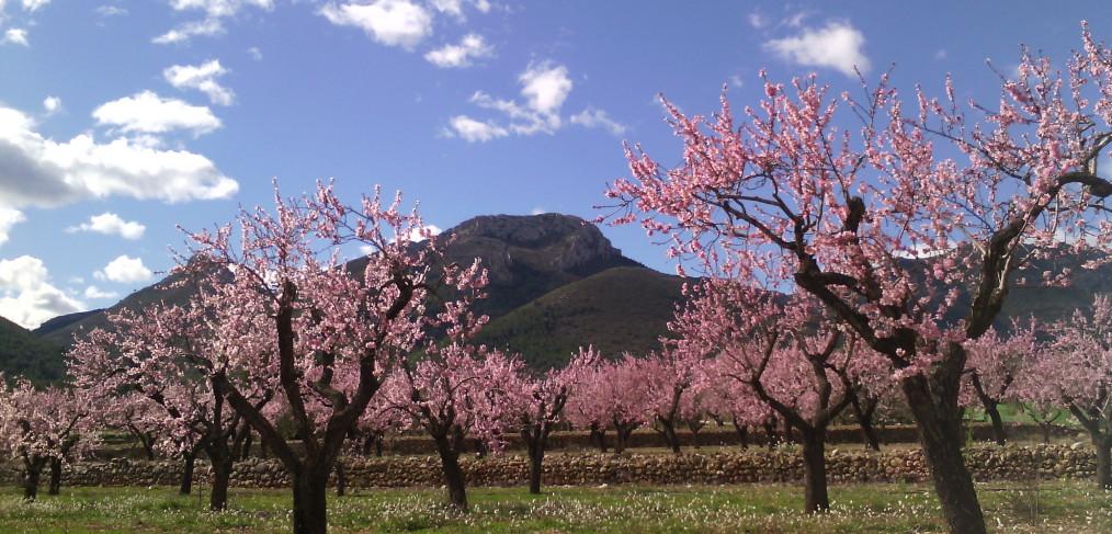 """FESLALÍ """"Alcalalí en flor"""" del 5 al 21 de febrero - Alcalalí turismo"""