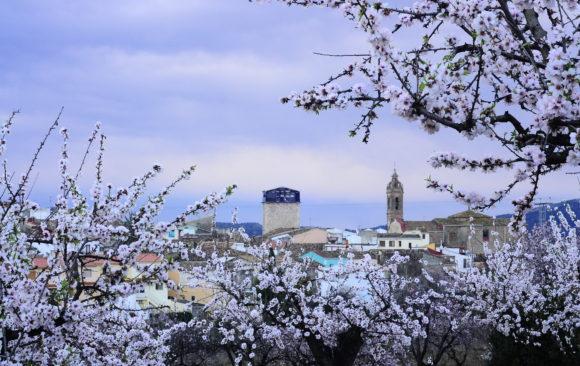 FESLALÍ, Alcalalí en flor.