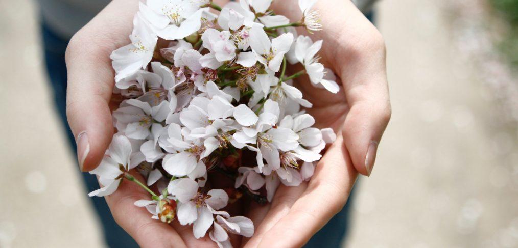Alcalalí en flor, Feslalí y sus almendras - Alcalalí turismo