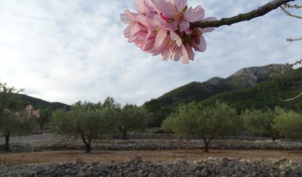 V MARATÓN FOTOGRÁFICA #ALCALALÍENFLOR - TEMÁTICA: LIBRE