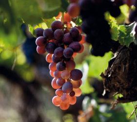 Ruta del Vino de Alicante - Alcalalí turismo