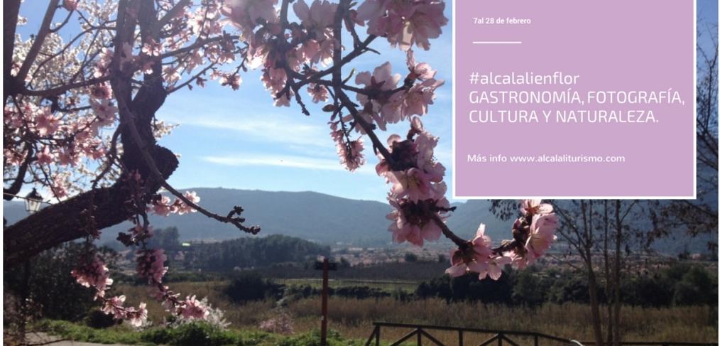Almendros en flor en Alcalalí.