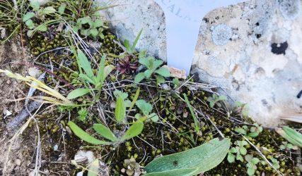 Orquídeas Alcalalí